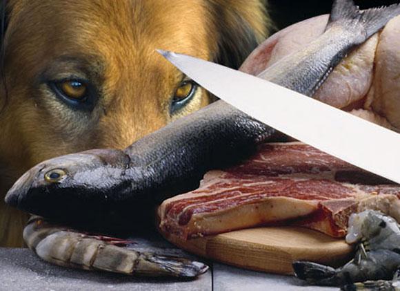 Perros carne cruda