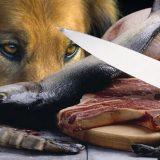Los alimentos crudos para mascotas pueden contener Listeria monocytogenes y Salmonella